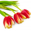 Three yellow-red tulips — Stock Photo