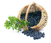 Bilberry in a basket — Stock Photo