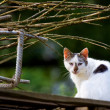 Stock Photo: White stray cat looking at watcher