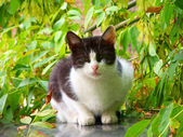White stray cat looking at the watcher — Stock Photo