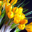 Stock Photo: Yellow crocuses