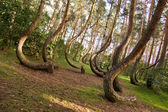 Curved forest — Stock Photo