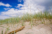 Moving dunes at the Baltic Sea — Stock Photo