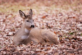 A deer in the Warsaw park — Stock Photo