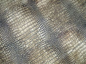 White crocodile skin texture, danger closeup. — Stock Photo