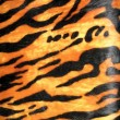 Stok fotoğraf: Tiger skin background, fashion animal diversity.