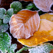 Стоковое фото: Background from autumn leaves