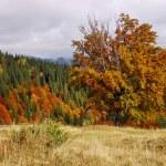 Autumn landscape — Stock Photo #4075081