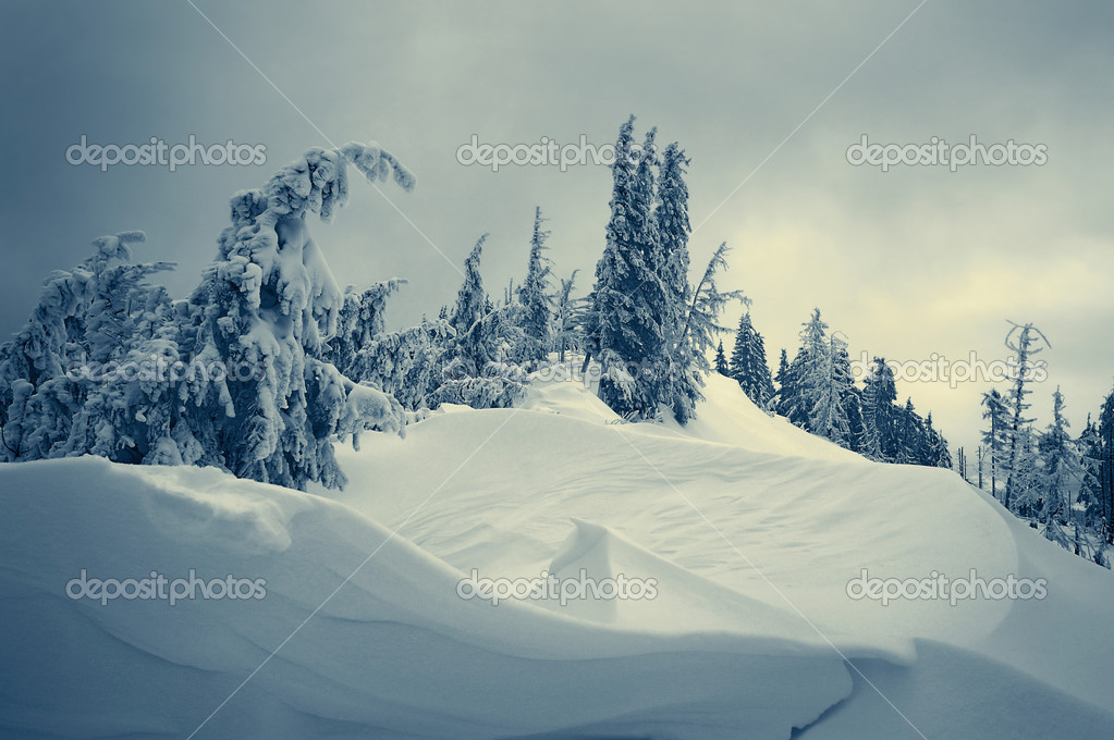 Winter landscape with snow in mountains Carpathians, Ukraine  Stock Photo #4248702
