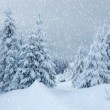 Winter landscape in mountains — Stock Photo #4267110
