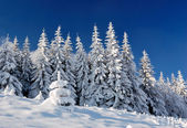 Winter landscape in mountains — Stockfoto