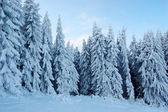 Winter landscape in mountains — Stok fotoğraf