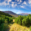 Summer landscape in mountains — Stock Photo #4731102