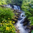 Yellow flowers near a mountain stream - Lizenzfreies Foto