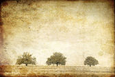 Trees in the summer field. Photo in old image style. — Foto de Stock