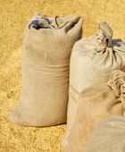 Sacks with wheat harvest and yellow hweat at background. — Stock Photo