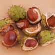Horse chestnut or conker. — Stock Photo #3944604