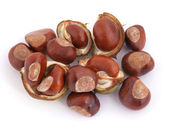 Horse chesnut or conker. — Stock Photo