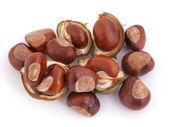 Horse chesnut or conker. — Stock Photo