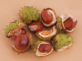 Horse chestnut or conker. — Stock Photo