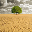 Tree alone in desert - Stock Photo