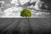 Tree on concrete plain — Stock Photo