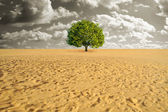 Tree alone in desert — Stock Photo