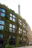 Vegetal wall on Branly museum in Paris — Stock Photo
