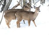 白尾鹿鹿幼崽和能源部 — 图库照片