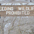 No Feeding Wildlife Sign — Stock Photo
