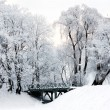 Winter landscape — Stock Photo #5150981