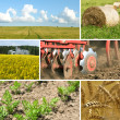 Agriculture collage — Stock Photo #5256936