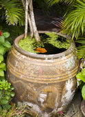 Growing tree in flowerpot with water — Stock Photo