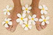 Woman legs with flowers Plumeria alba — Stock Photo