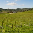 Vineyard — Stock Photo #5209321