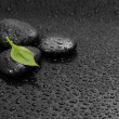 Black background with stone with leaf — Stock Photo