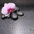 Black stones and orchid with water drops — Stock Photo