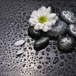 Black stones and white camomile — Stock Photo