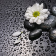 Chamomile and black stones — Stock Photo #4205340