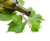 Wine bottle and green grape vine — Stock Photo
