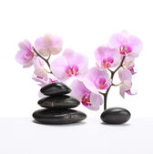 Orchid flower with stone — Stock Photo