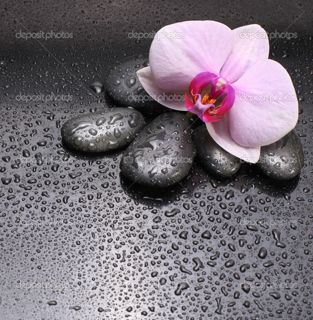 Black stones and flower — Stock Photo #4205036