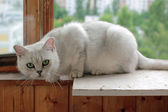 The cat's photosession. Photo 6 — Stock Photo