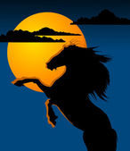 Black horse and the moon; — Stock Photo