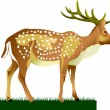 Stock Vector: King deer