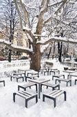 En el parque de nieve — Foto de Stock