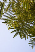 Fern foliage against a blue sky — Stock Photo
