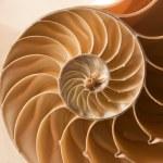 Close up nautilus shell pattern — Stock Photo #4139171