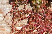 Podzimní listí pozadí — Stock fotografie