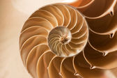 Close up nautilus shell pattern — Stok fotoğraf